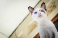 充满好奇的猫眼图片(10张)