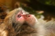 可爱的猴子图片(16张)