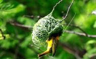 鸟巢图片(9张)