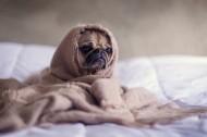 可爱的宠物小狗图片(14张)