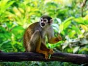 形似松鼠的松鼠猴图片(15张)