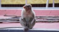 可爱的猴子图片(17张)
