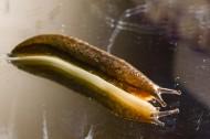 蛞蝓图片(11张)