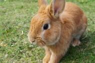 可爱呆萌的兔子图片(13张)