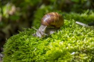 可爱小巧的蜗牛图片(11张)