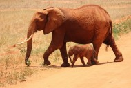 可爱的大象和小象图片(8张)