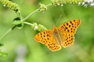 好看的黄色蝴蝶图片(10张)
