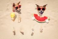 沙滩上可爱的狗狗图片(15张)