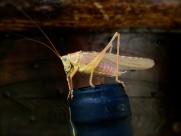 形态各异的蝗虫图片(12张)