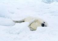 海豹图片(27张)