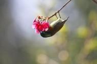 吉祥太阳鸟图片(7张)