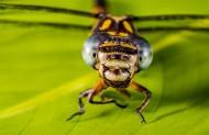 可爱的蜻蜓图片(14张)