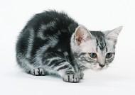 宠物猫图片(26张)