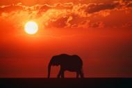 野生大象图片(11张)