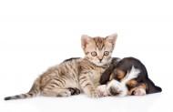宠物猫和宠物狗图片(8张)