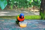可爱的鹦鹉图片(9张)