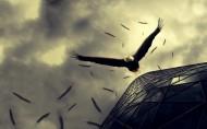 威武的雄鹰图片(16张)