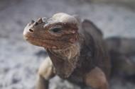 蜥蜴高清图片(12张)