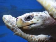 海龟图片(19张)
