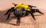 姿态各异的蜘蛛图片(13张)