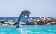 水中嬉戏的海豚图片(22张)
