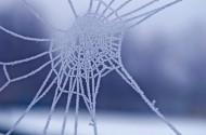 晶莹冰冻的蜘蛛网图片(7张)