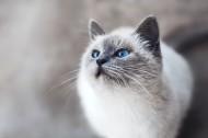 无比可爱宠物猫图片(10张)