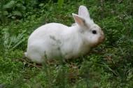 可爱的小白兔图片(12张)