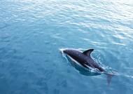 鲸鱼图片(28张)