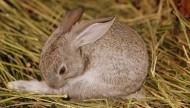 可爱超萌兔子图片(20张)