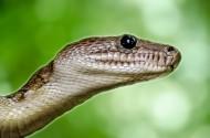 蛇图片(13张)