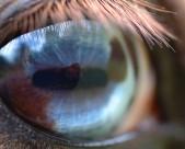 马的眼睛特写图片(16张)