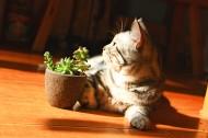 调皮可爱的猫图片(10张)