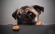 可爱卖萌的狗狗图片(17张)