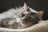 猫窝里的猫咪图片(10张)