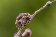 蜘蛛图片(11张)