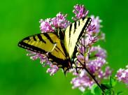 各种美丽的蝴蝶图片(10张)