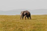 可爱的大象图片(9张)
