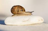 缓慢爬行的蜗牛图片(14张)