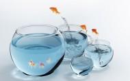 跳跃的金鱼图片(13张)