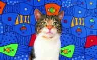 艺术猫咪图片(25张)