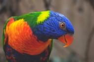 羽毛光鲜的鹦鹉图片(19张)