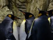 可爱的企鹅图片(10张)