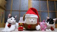 戴帽子可爱的猫图片(20张)