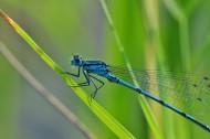 停留的蜻蜓图片(12张)