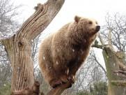 站在树桩上的动物图片(12张)
