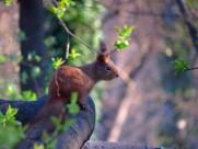 可爱的松鼠图片(9张)