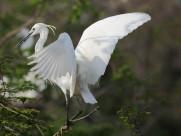 白鹭图片(12张)