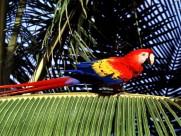 鹦鹉图片(21张)