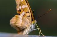 微距蝴蝶图片(10张)